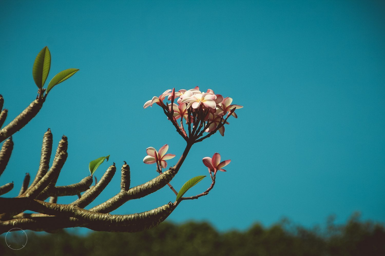 Bountyeiland Koh Ngai Thailand bloemen