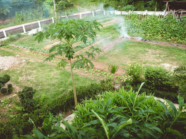 Groenten en kruiden uit eigen tuin