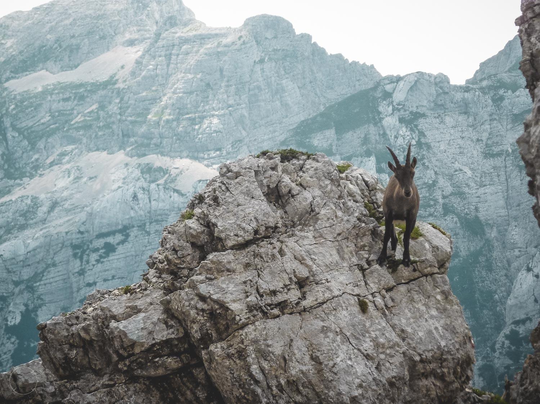 Bergwandelen - de gastheer