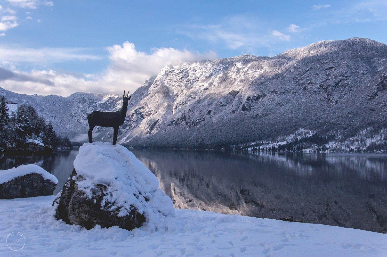 Slovenië - Meer van Bohinje in de winter