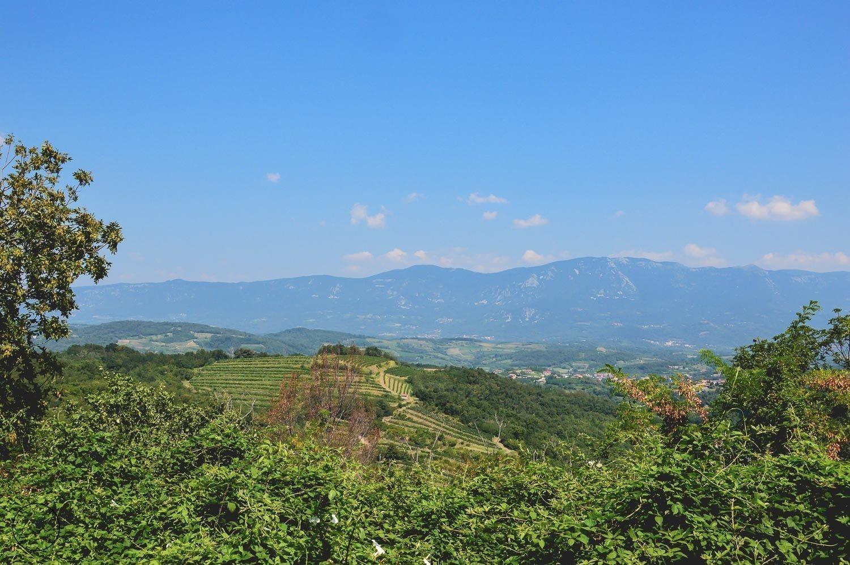 De wijnvelden in de Primorska wijnregio